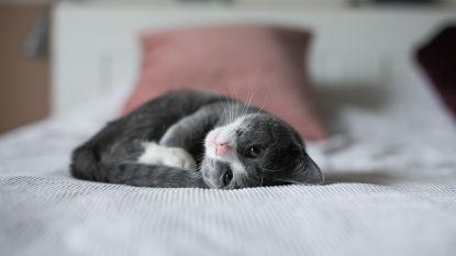 Tips van een crazy catlady: dit moet je weten als je een kitten in huis haalt