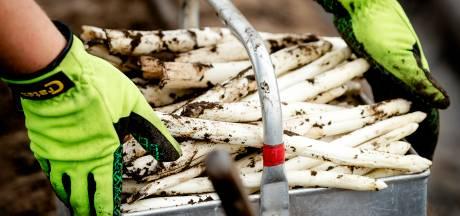 Sallandse asperges blinken nog steeds