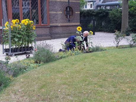 Burgemeester plant zonnebloemen ter nagedachtenis aan slachtoffers ramp MH17