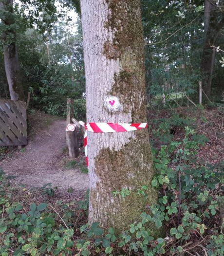 Bewoners nieuwe villawijk weten kap van 17 bomen vooralsnog op het nippertje  te stoppen