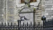 Zeelse duiven aan de pil? Gemeentebestuur plant maatregelen na tussenkomst N-VA over duivenplaag