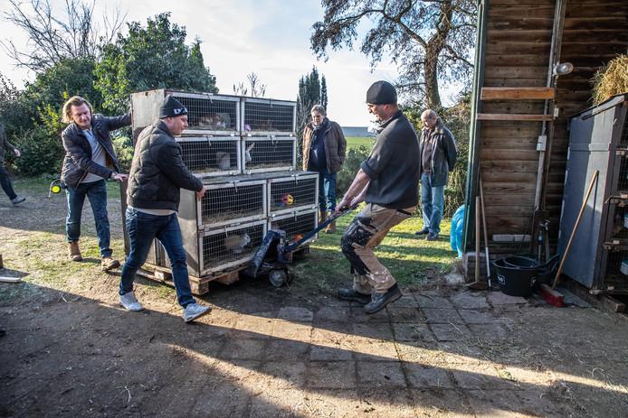 Begin dit jaar verhuisde dierenopvang Flappus naar een nieuw onderkomen op Hessenpoort. De extra ruimte zorgde voor meer aanvoer van dieren, wat de stichting nu financieel in de problemen brengt.