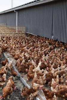 Landelijke ophokplicht voor pluimvee nadat zwaarste variant vogelgriep opduikt in Kockengen