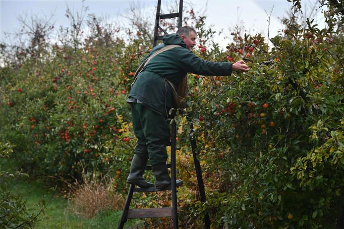 Fruit plukken in Rivierenland.