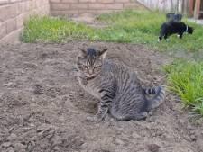 Hoe je poepende katten uit je tuin weert
