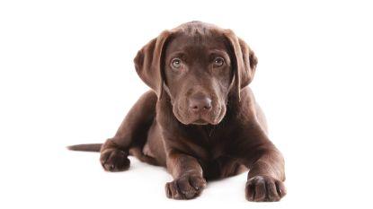 Waarom honden tot 60% duurder zijn geworden in vijf jaar tijd