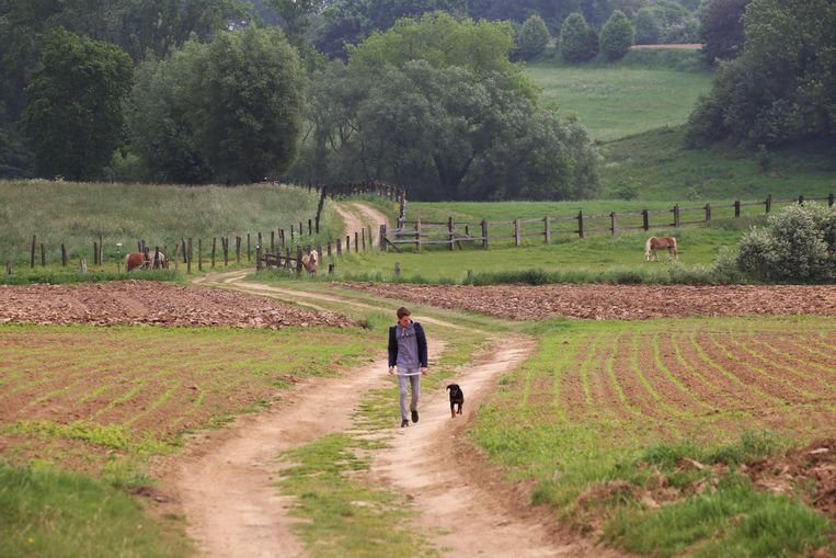 De wandelweg kronkelt tussen velden en weides. De plannen om er een fietsverbinding van te maken in beton, blijven nu even liggen na de vele klachten van onder meer buurtbewoners.