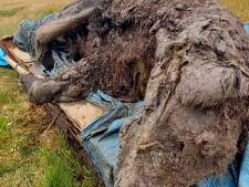 Siberische rendierherders vinden voor het eerst een volledig intacte holenbeer uit de IJstijd