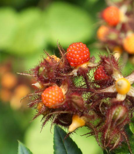 Zeeland krijgt nog dit jaar acht nieuwe voedselbosjes