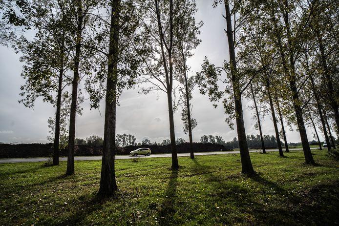 bomen rij gaat weg langs de a15 Bemmel. bomenkap.