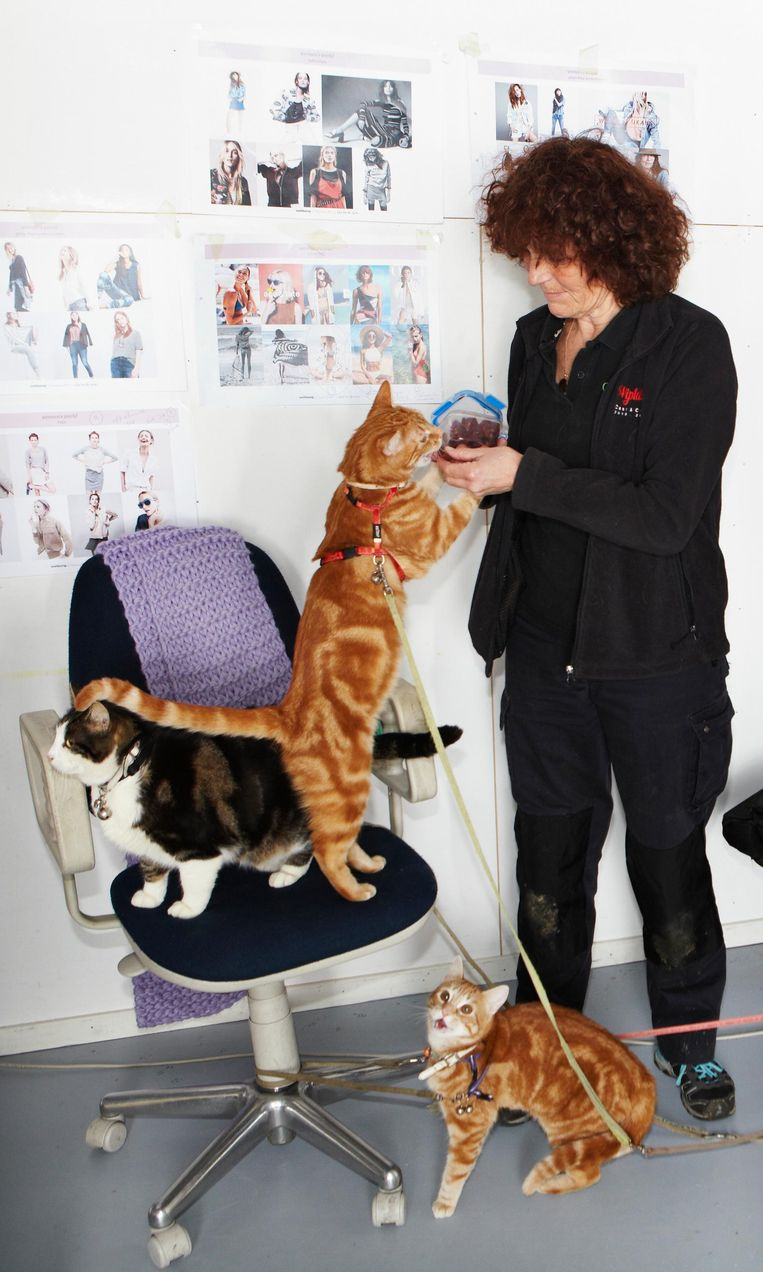 Sabine van der Helm met drie van haar katten. Ze doen ervaring op tijdens de shoot voor Wehkamp Beeld Jan Dirk van der Burg
