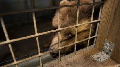 Beren Mimi en Uli eindelijk gered