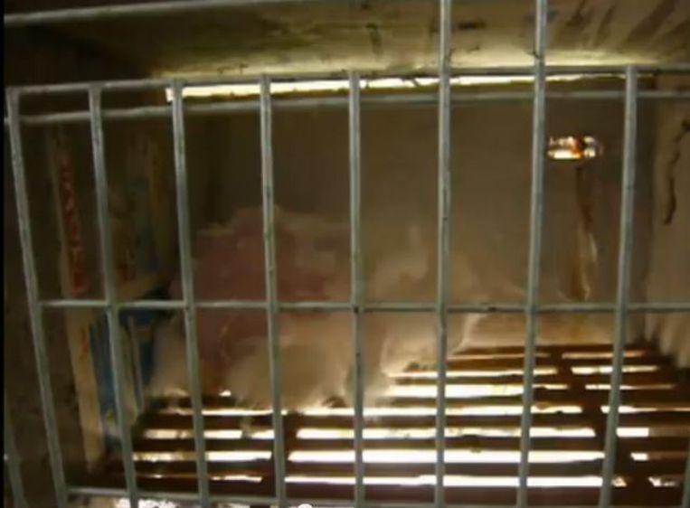 Een geplukt konijn in een hok in China. Beeld null