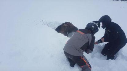 Canadezen redden eland die vastzit in groot pak sneeuw