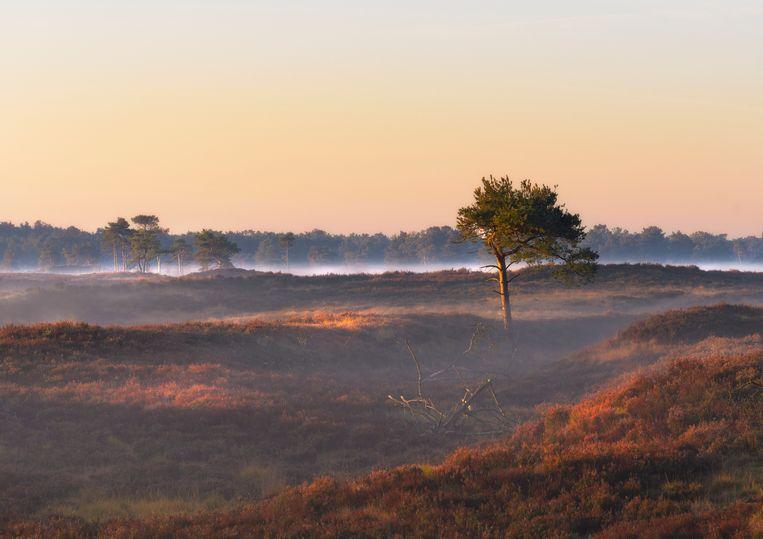 De Kalmthoutse Heide.