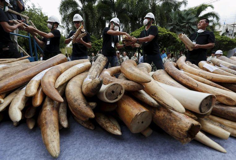 Het aantal olifanten nam de voorbije tien jaar af met 110.000 dieren tot 415.000 als gevolg van stroperij.