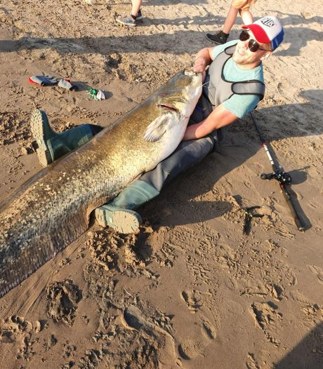 Vissers halen enorme meerval uit de IJssel tussen Deventer en Zwolle