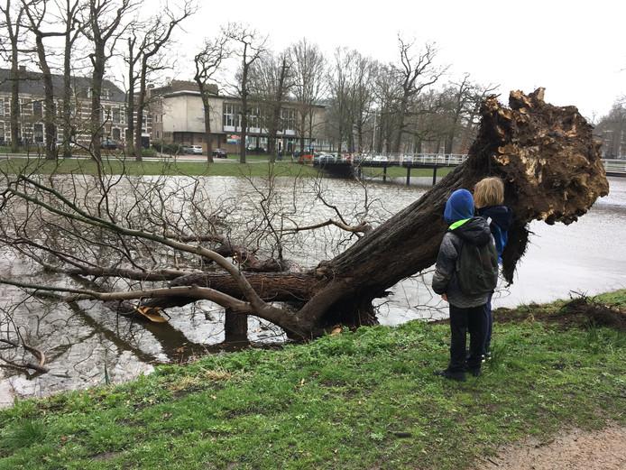 Zonder schade aan te richten stortte de boom nabij het Kerkbrugje in Zwolle in de stadsgracht.