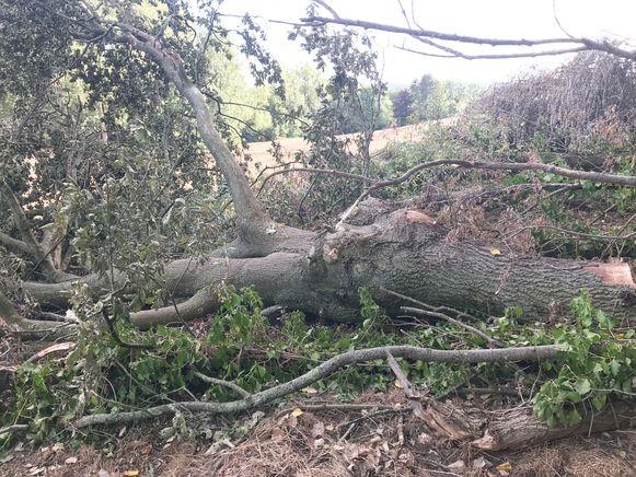"""""""Enkele forse bomen zijn gerooid en dat zonder vergunning"""", klaagt de natuurvereniging aan."""
