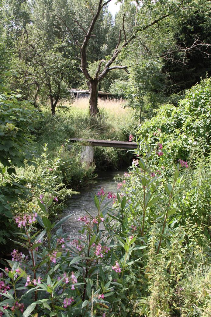Bij Overpelt is de Dommel een klein riviertje geworden.