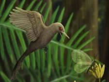 Wetenschappers ontdekken kleinste dinosaurus ooit: 'Ongeveer even groot als een kolibrie'