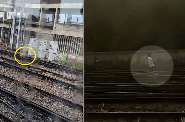 Treinreizigers schreven op Twitter dat ze een hond over de sporen zagen lopen. Even later volgde een man, vermoedelijk zijn baasje.
