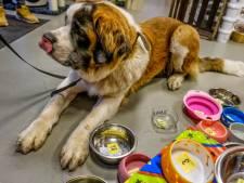 Corona treft dierenwinkel Van Vugt in Drunen, eigenaren in quarantaine met ziek kind