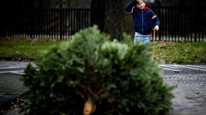 Naar deze ophaalpunten in de Genkse wijken kan je je kerstboom brengen