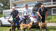 Drie nieuwe patrouillehonden voor politiezone Zennevallei