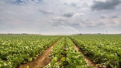 Pieter De Crem op voordracht Landbouwraad