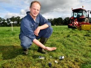 Koeien bloeden dood door scherven in weiland: 'Voer statiegeld op blikjes in'