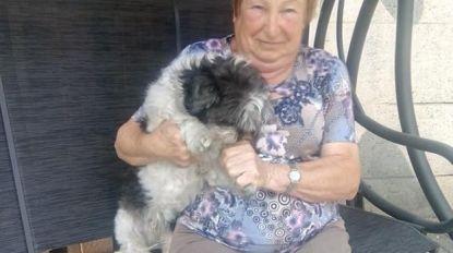 Onbekenden stelen hondje van bejaarde vrouw