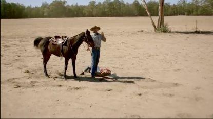 Jaloezie, 'sexy' outfits en een op hol geslagen paard: de boeren hebben hun handen vol in 'Boer zkt Vrouw'