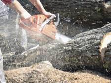 Bomenkap op de Eltenberg: droge zomer nekt sparren