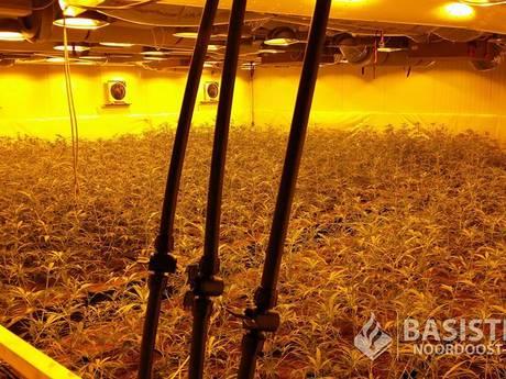 Hennepplantage met 2.200 planten opgerold in Losser
