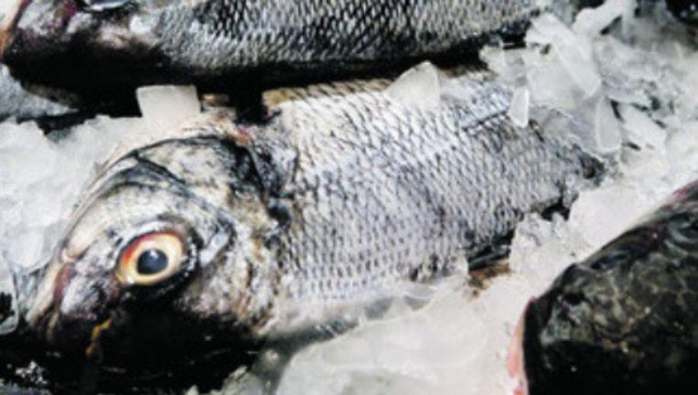 Duurzaam gevangen vis in de koeling bij Marqt. Foto: Jorgen Caris Beeld