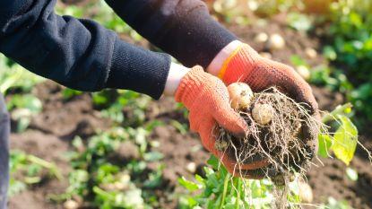 Vlaamse boeren verwachten (nog meer) verliezen door coronacrisis