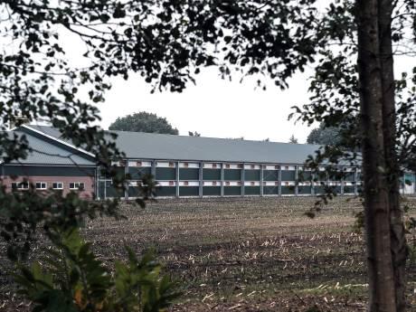 Buurman mag blijven klagen over kippenhouder in Halle