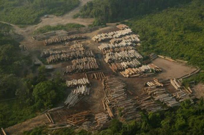 Les Indiens d'Amazonie sont menacés par la déforestation aussi