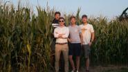 Feestje midden de maïs: zaterdag 'Ville en Vert' in Assenede