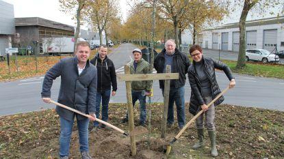 """Izegem moet en zal groener worden: """"We zullen duizenden nieuwe bomen planten"""""""