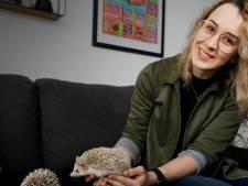 Steffie en Carlo hebben twee egels als huisdier: 'Mensen vragen of de stekels geen pijn doen'
