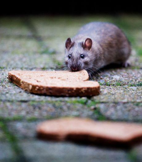 Oeps: bord waarschuwt voor ratten in plaats van voor rioolwerkzaamheden