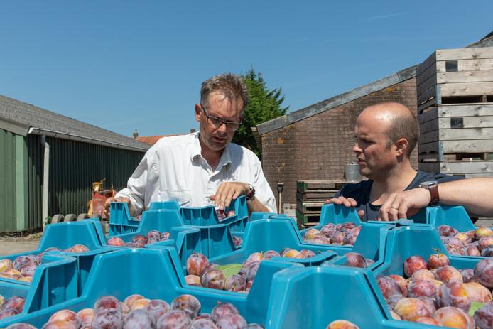 Bart Schoonebeek (rechts) van Boerschappen haalde maandag 500 kilo op bij fruitteler Kees Hamelink in Wemeldinge.