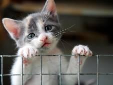 Dierenopvang: 'Geen vrees voor uitbraak kattenziekte in  Zuidoost-Brabant'