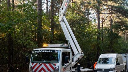 Boombruggen voor overstekende eekhoorns