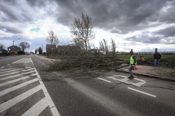 In Vlijtingen op de steenweg tussen Bilzen en Riemst lag een omgevallen boom op de weg