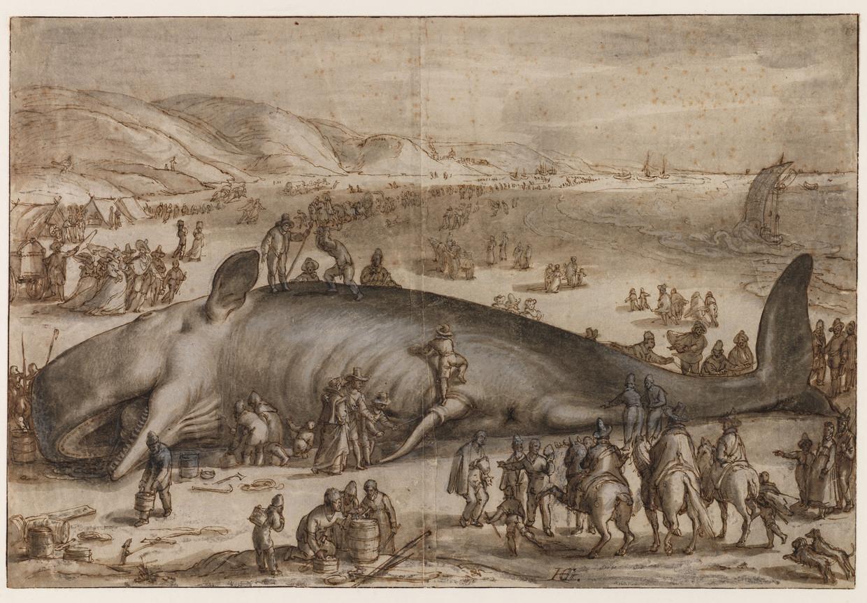 Hendrick Goltzius, 'Gestrande potvis bij Berckhey', 1598, tekening. Beeld Martijn Zegel / Teylers Museum Haarlem