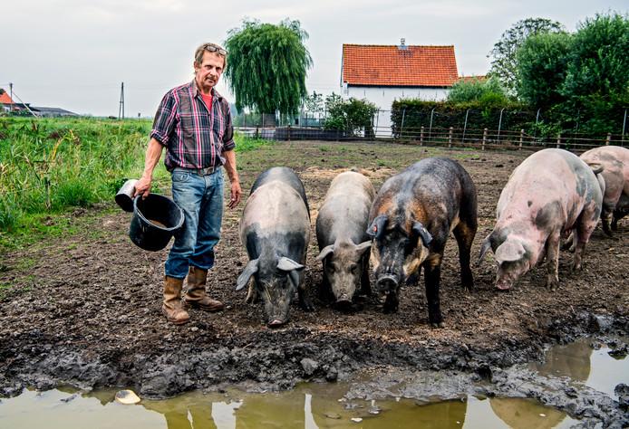 Boer Henk Flippo laat zijn varkens vrij bewegen op zijn boerderij in Waddinxveen. Flippo: ,,Je ziet dat de varkens het naar hun zin hebben.''