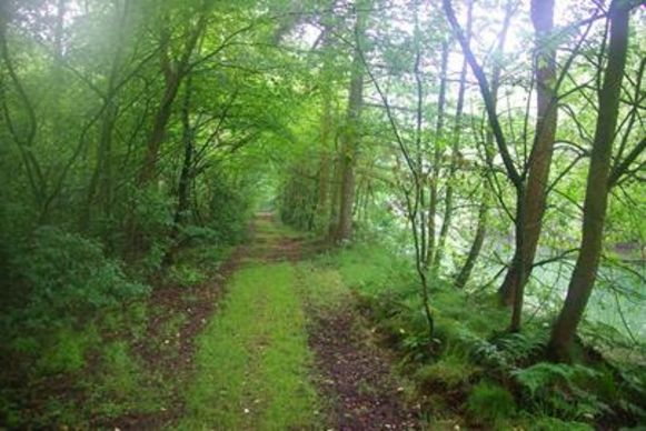 In het Philipsbos in Grobbendonk zullen vanaf 1 september bosbeheerwerken plaatsvinden